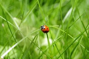 ladybug-796481_1920